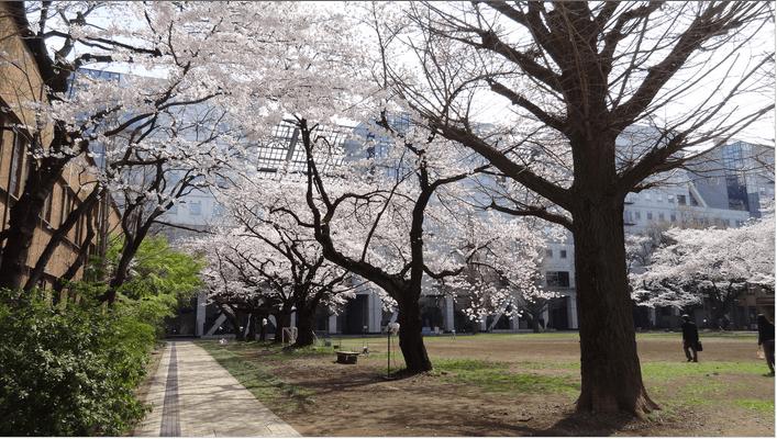 2014先端研の桜3