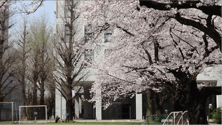 2014先端研の桜5