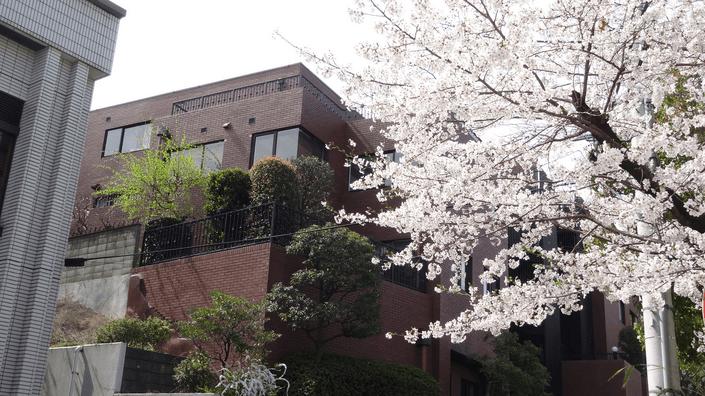 2014代々木上原の桜