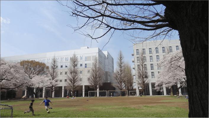 2014先端研の桜6子供たち